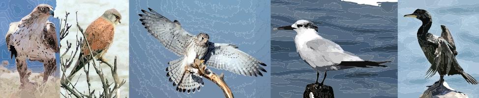oiseaux des calanques